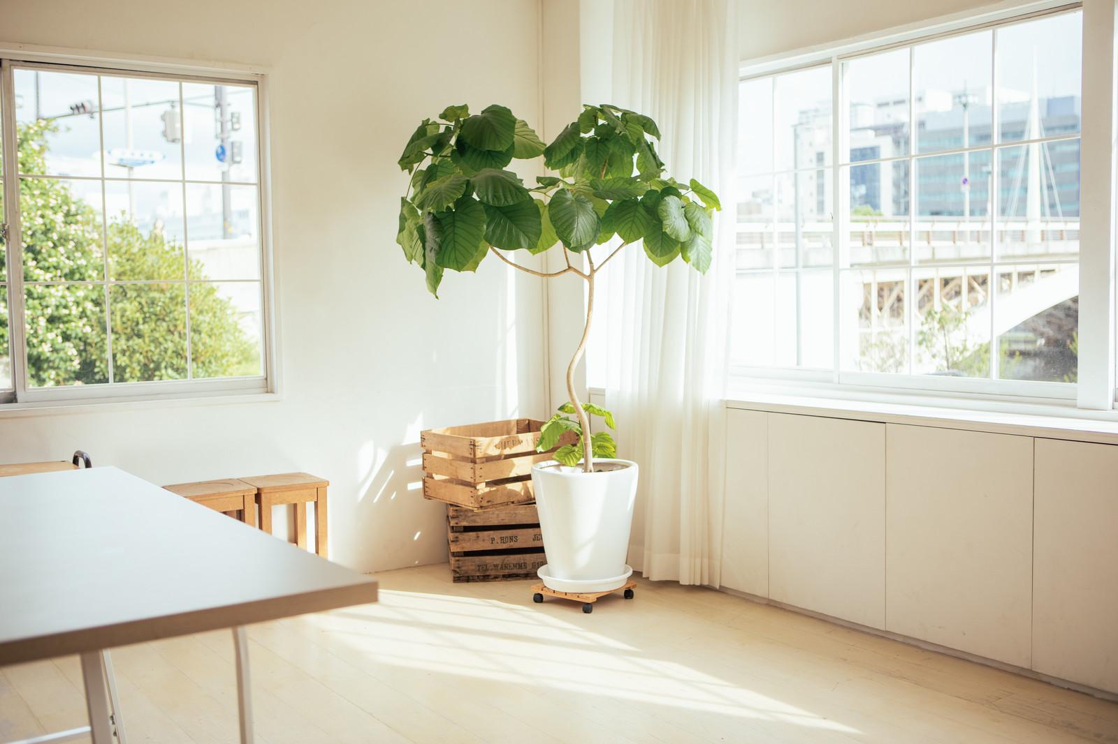 個人宅観葉植物レンタル