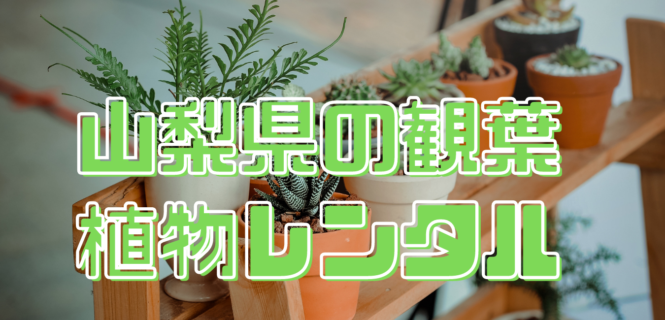 山梨県観葉植物レンタル (1)
