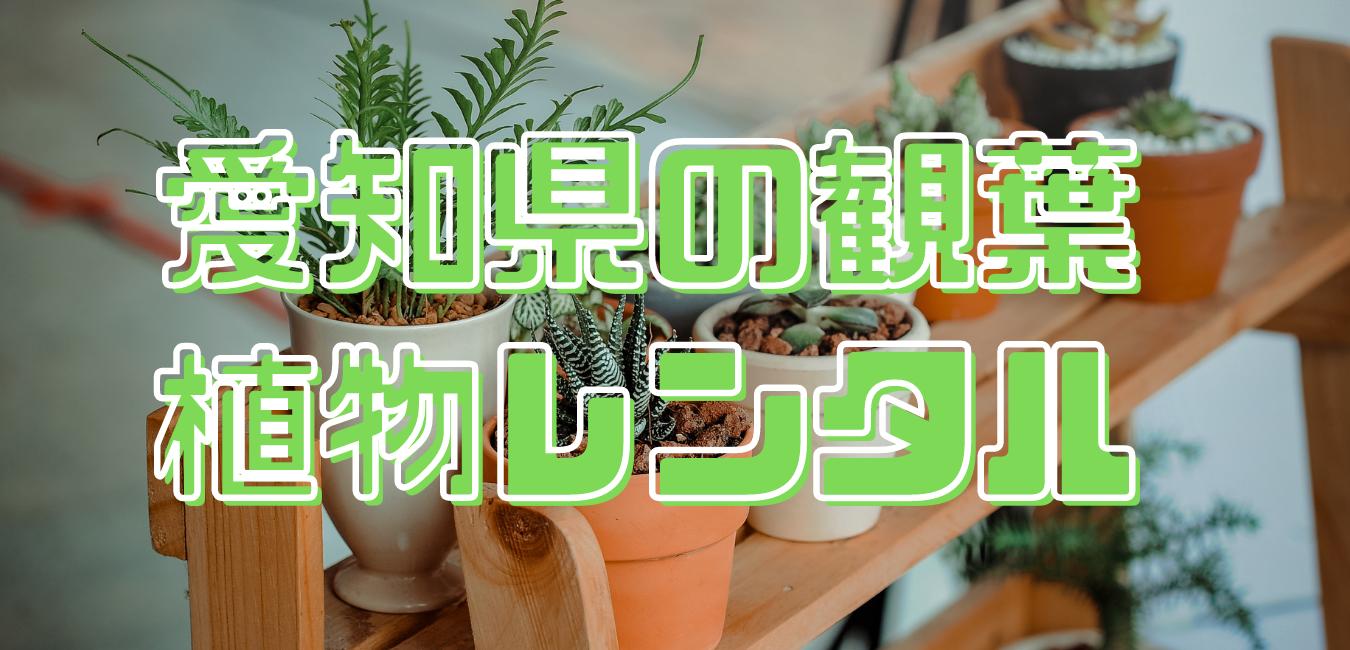 愛知県の観葉植物レンタル