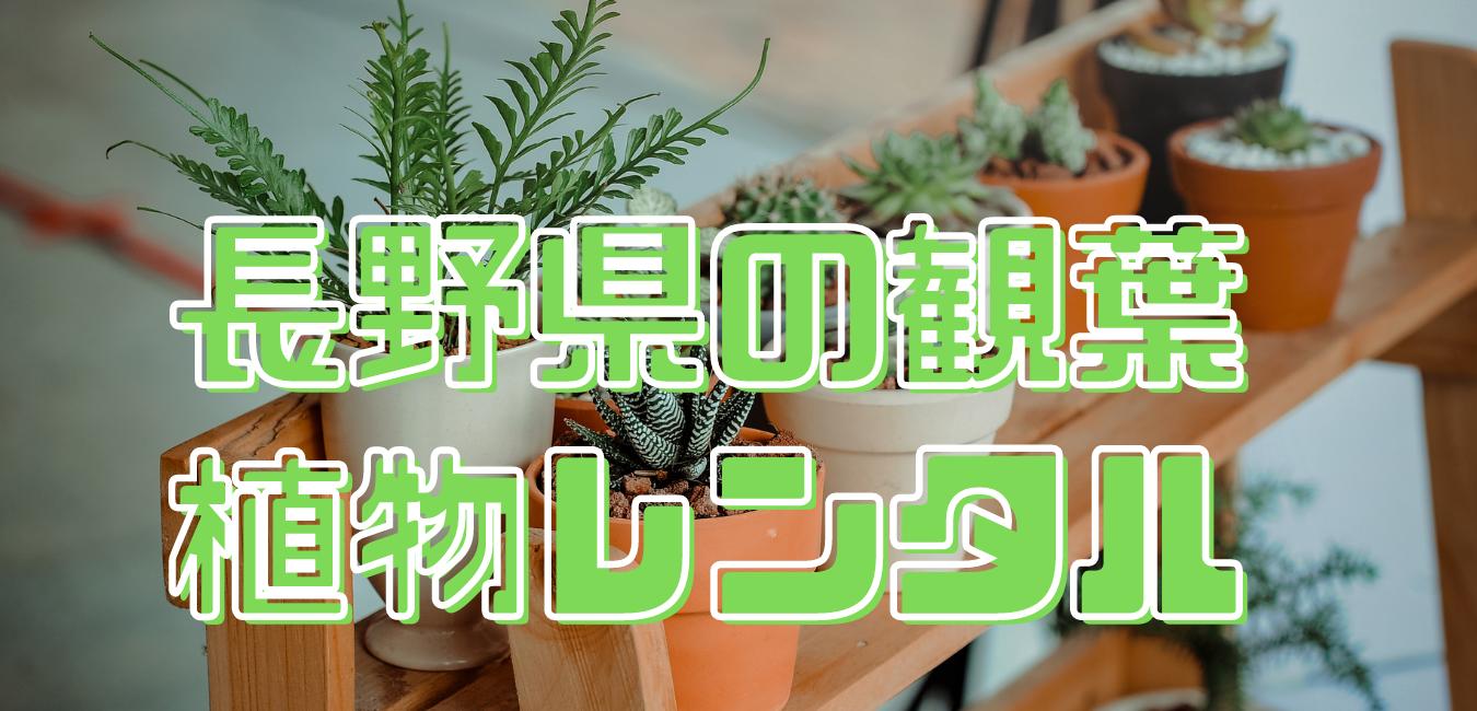 長野県観葉植物レンタル (1)