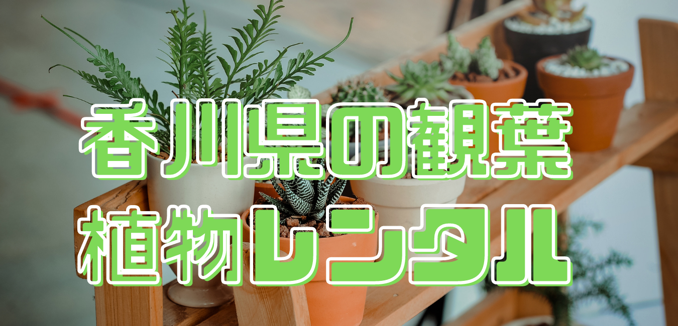 香川県観葉植物レンタル