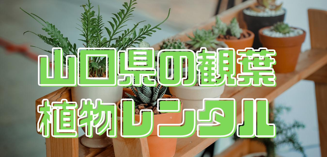 山口県観葉植物レンタル