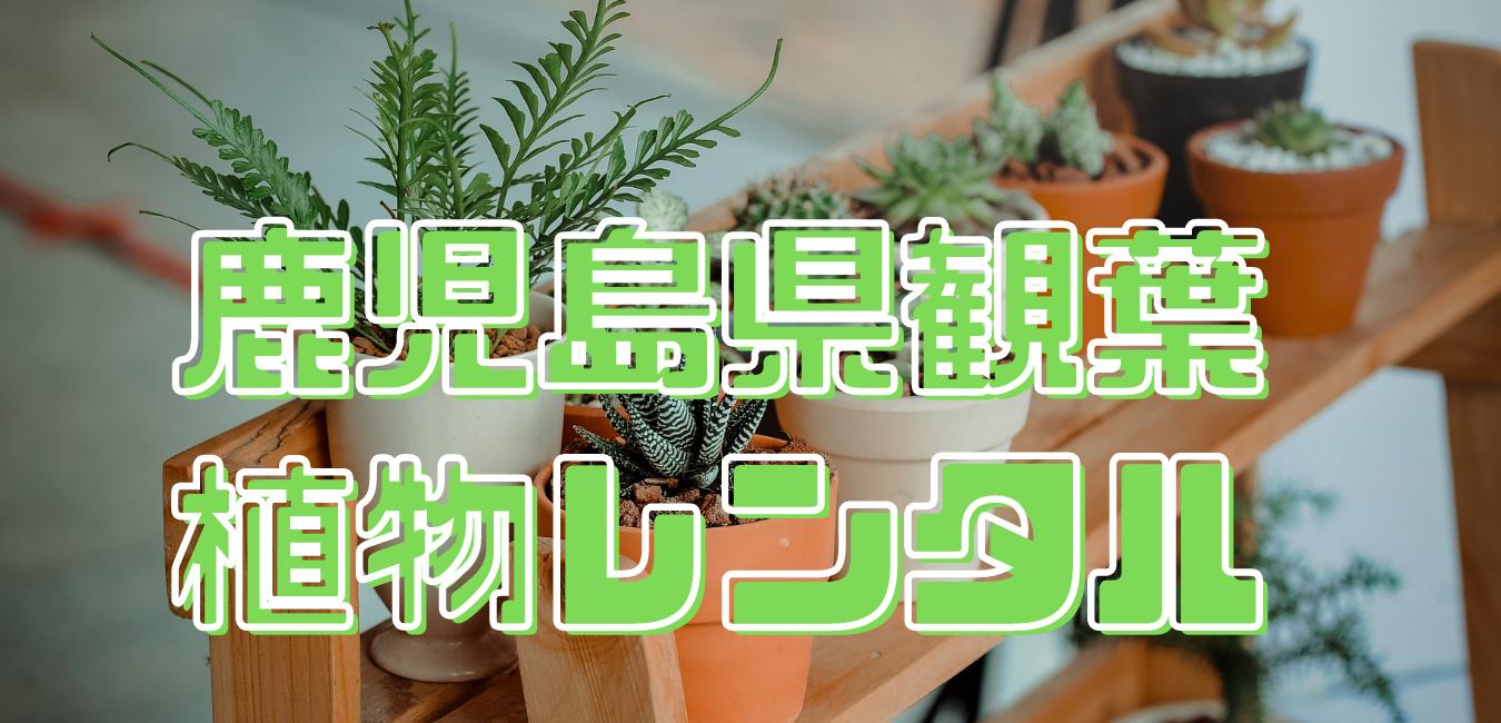鹿児島県観葉植物レンタル