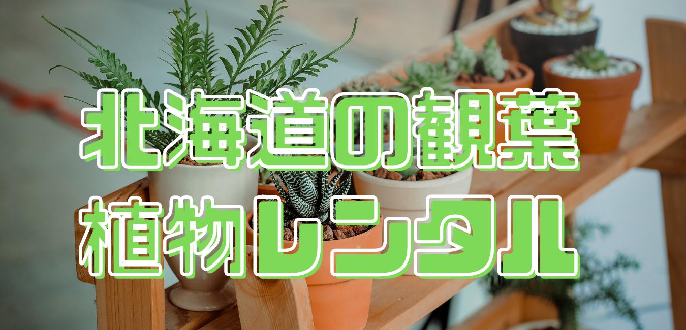 北海道の観葉植物レンタル