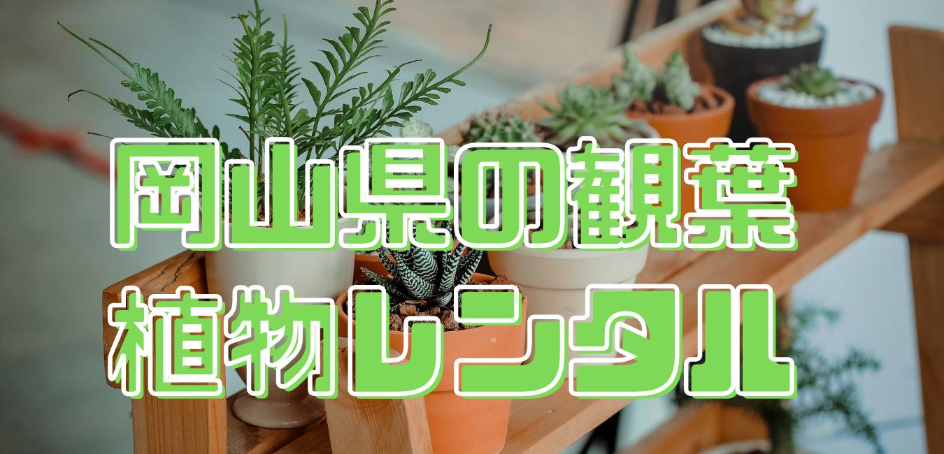 岡山県観葉植物レンタル
