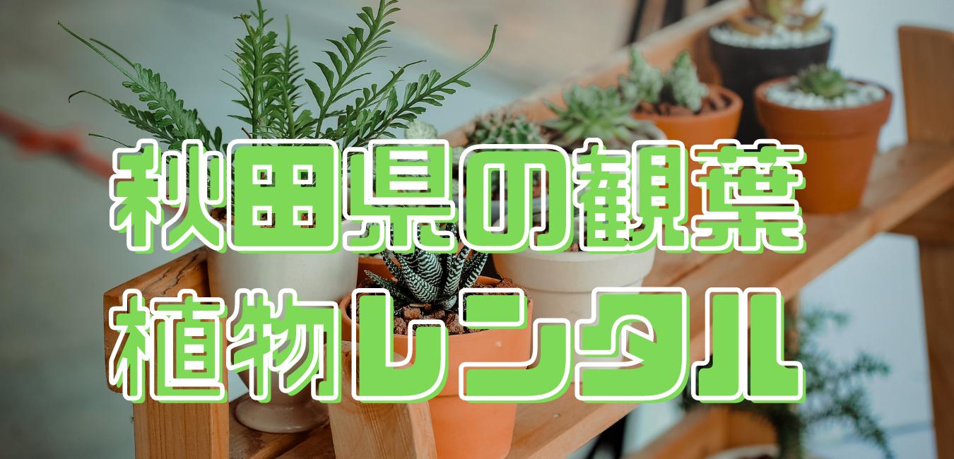 秋田県観葉植物レンタル