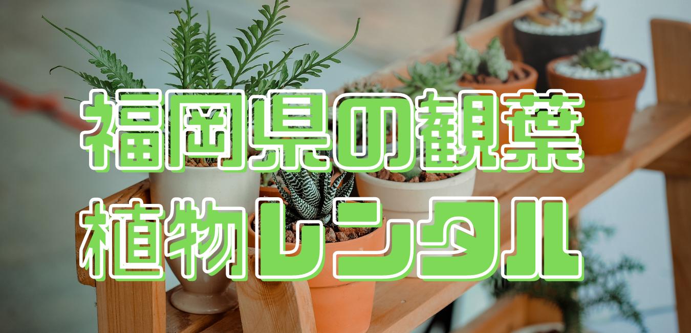 福岡県の観葉植物レンタル