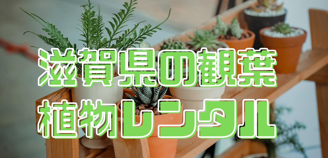 滋賀県観葉植物レンタル